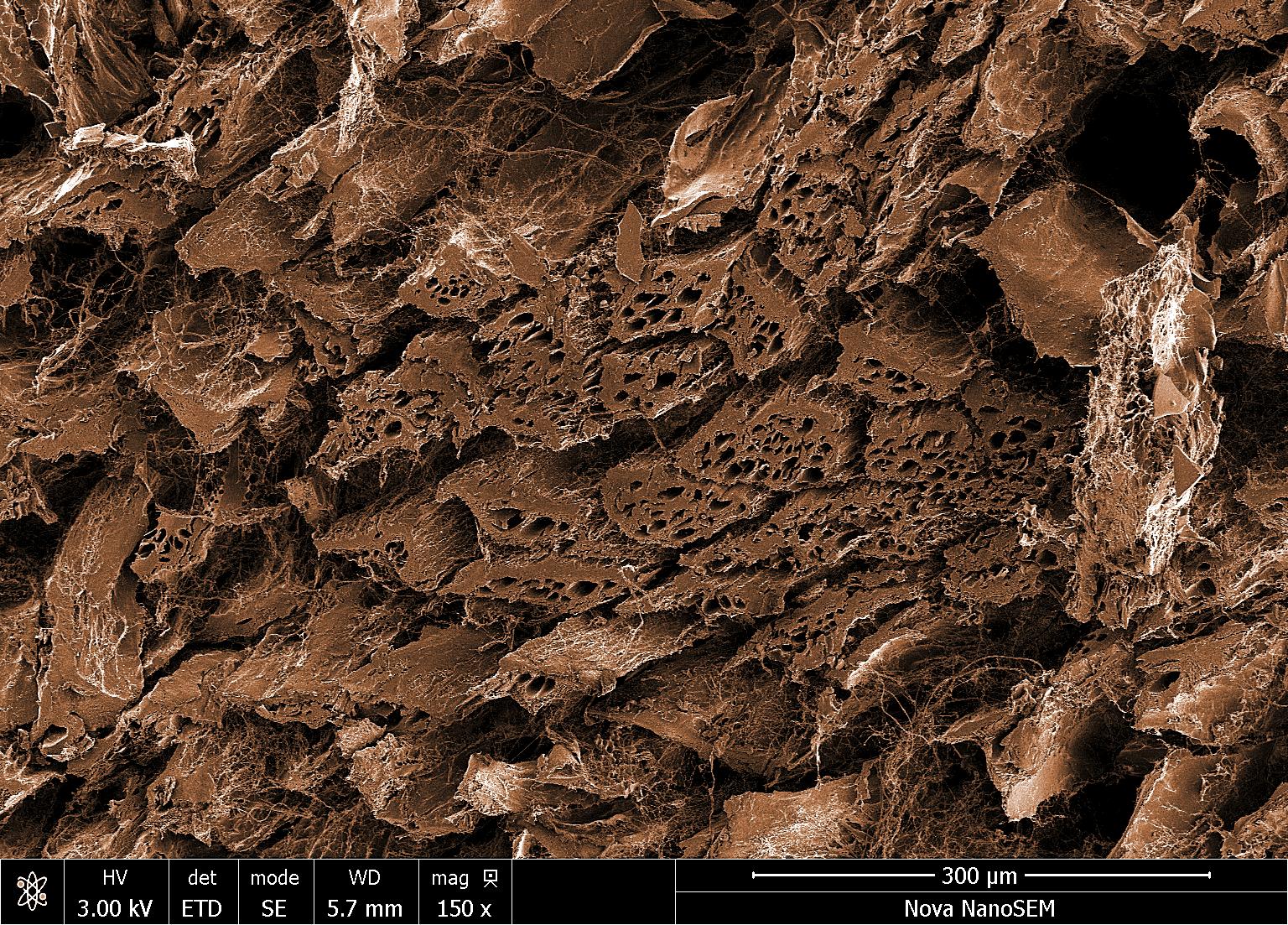 steak under microscope