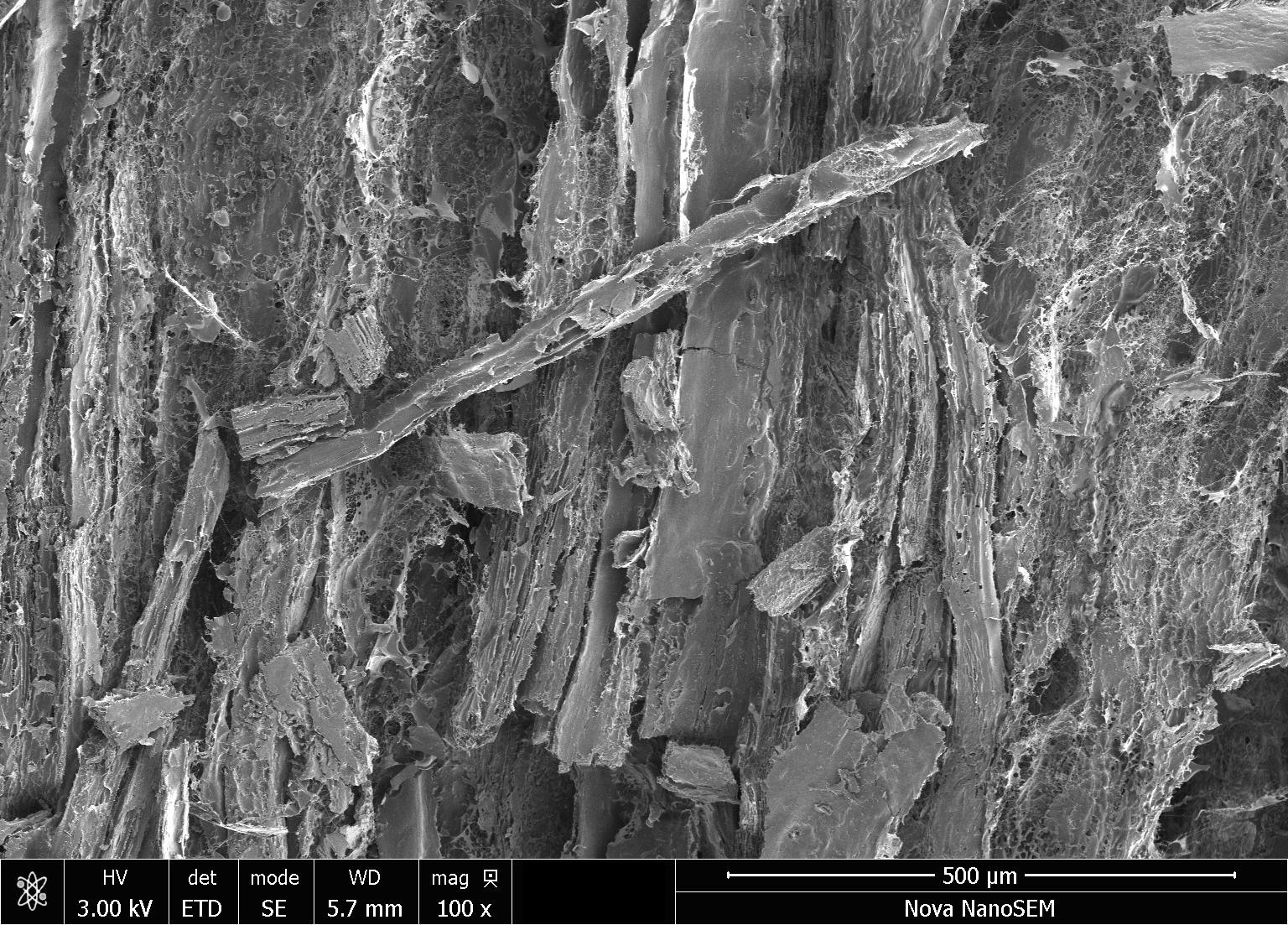 chicken under microscope
